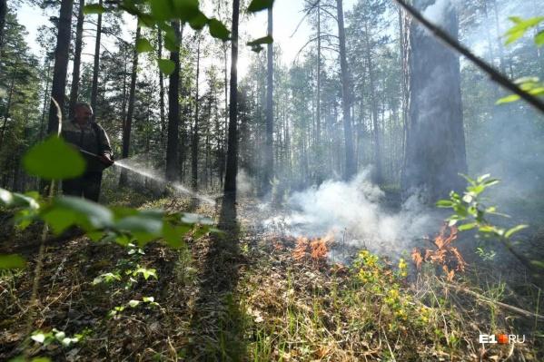 Всего с начала года в области ликвидировано 520 лесных пожаров