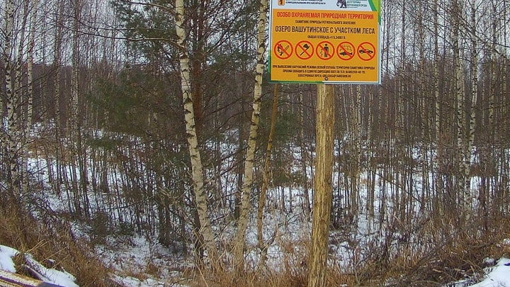 В 50 метрах от охраняемого озера: в Ярославской области нашли незаконно построенную дорогу