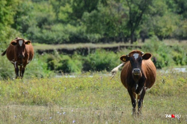 Засуха ударила по производителям мяса