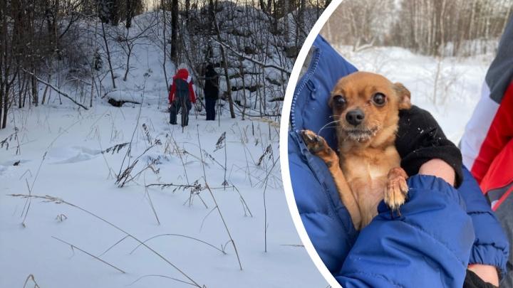 Пропавшую пенсионерку нашли в лесу благодаря лаю ее тойтерьера