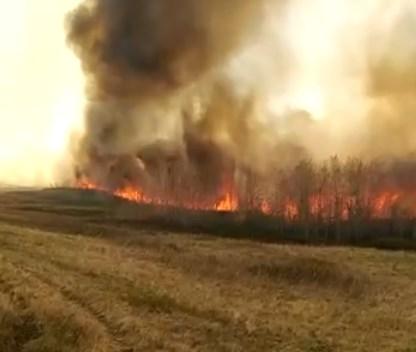 Лесной пожар в Баймакском районе Башкирии сняли на видео