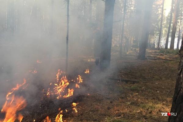 С 19 апреля в регионе запрещено разводить костры в лесу
