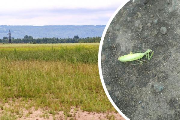 Появление насекомых связано с климатическими изменениями