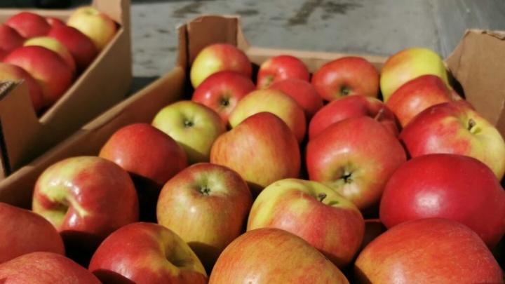В Самарской области уничтожат несколько десятков тонн польских яблок
