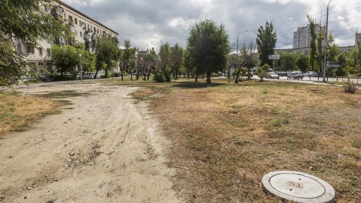 «Вместо благоустройства — безжизненная пустошь»: жители Волгограда жалуются на мертвые деревья и пустырь в центре города