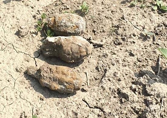 Как грибы после дождя. В частном секторе Волгограда нашли четыре ржавых гранаты