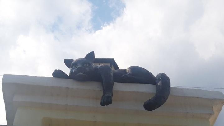 За музеями Кургана будут присматривать коты