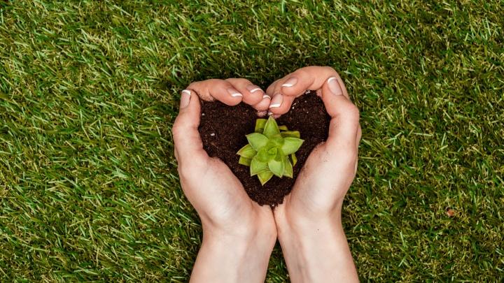 Сбер и Министерство экологии Красноярского края будут развивать экологическое волонтерство