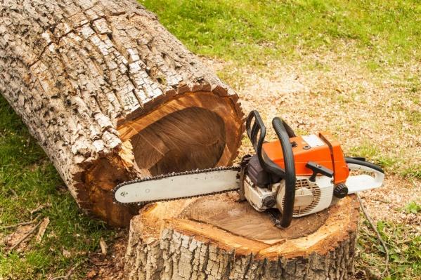 Лесоруб, видимо, не совсем верно рассчитал траекторию падения дерева
