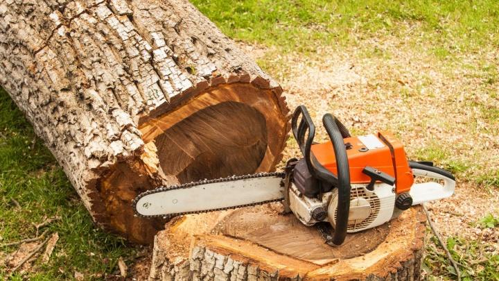 В Самарской области упавшее дерево насмерть придавило мужчину