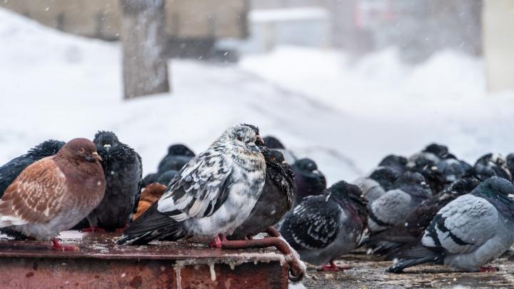 Омичей просят убрать вещи с крыш: МЧС предупреждает о метели и сильном ветре