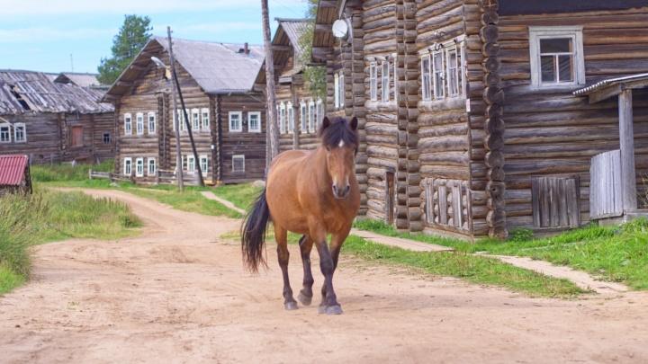 Фотопрогулка по Кимже: это одна из самых красивых деревень России, которой восхищается Варламов