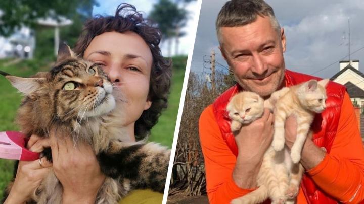 Внимание: котики! Смотрим на пушистых друзей екатеринбургских знаменитостей