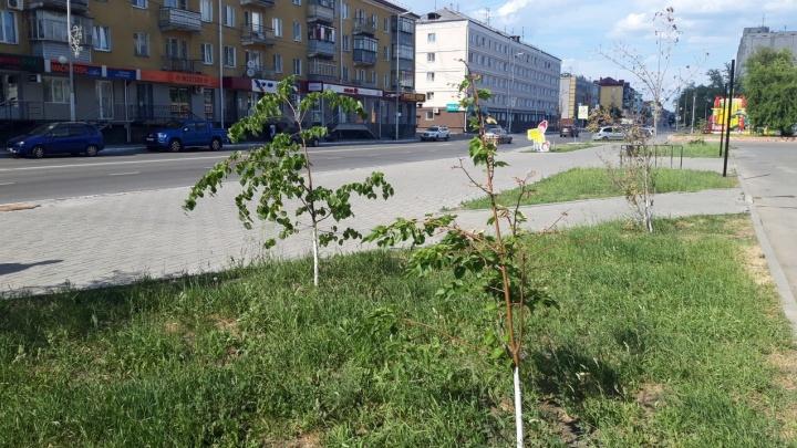 Администрация Кургана потратит 2,4 миллиона рублей на поливку деревьев