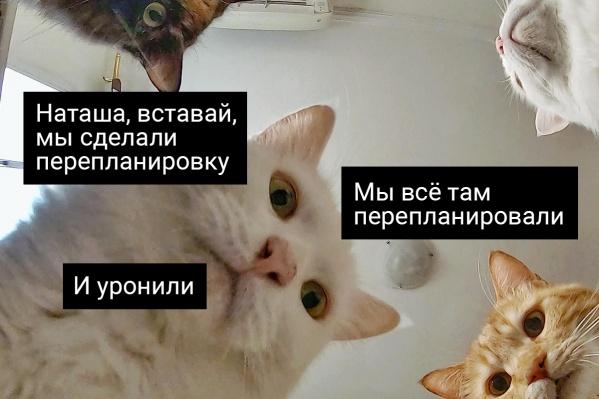 А штраф за вас тоже коты платить будут?