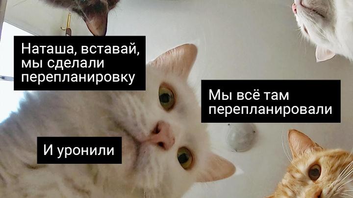 Даже кошек толком не развести: проверьте, что можно, а что нельзя делать в собственной квартире
