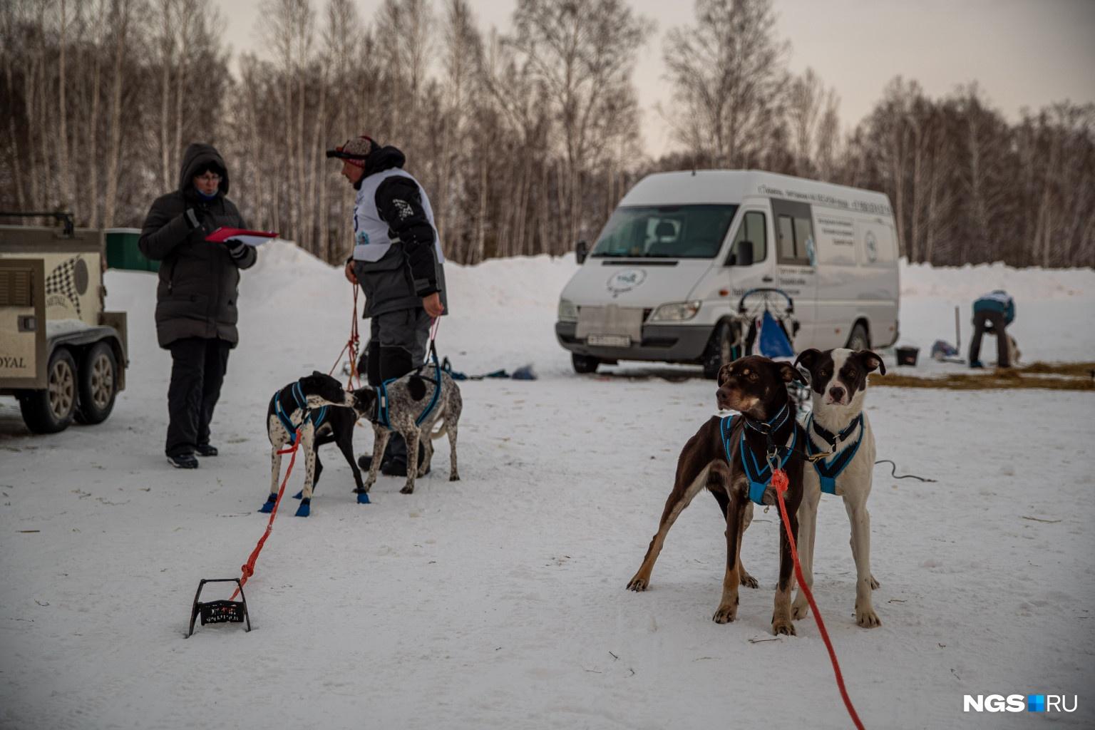 Спортсмены соревновались по нескольким дисциплинам с двумя, четырьмя и шестью собаками