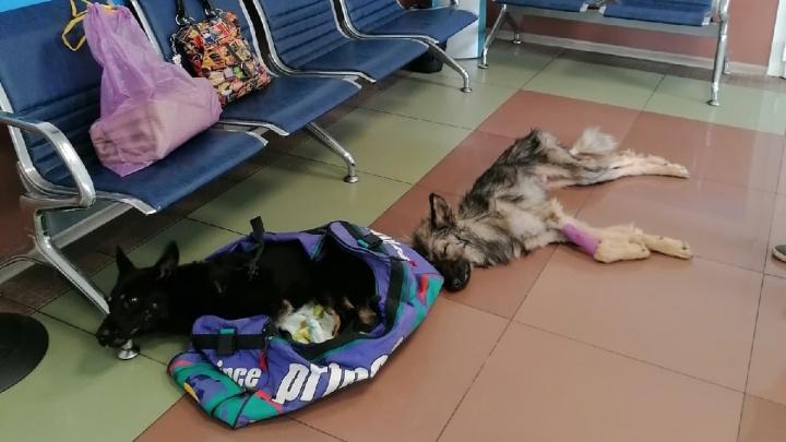 «Собак просто пытали голодом»: зоозащитники в ужасе от условий в частном приюте под Архангельском