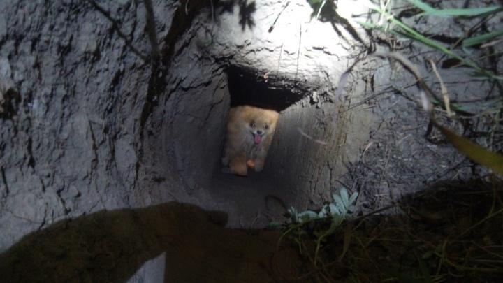 В Верхней Пышме шпиц провалился в узкую яму, вырытую для установки столба