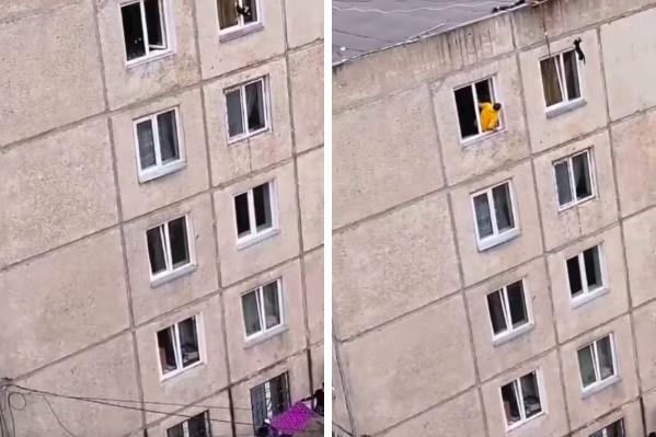 Животное застряло в приоткрытом окне