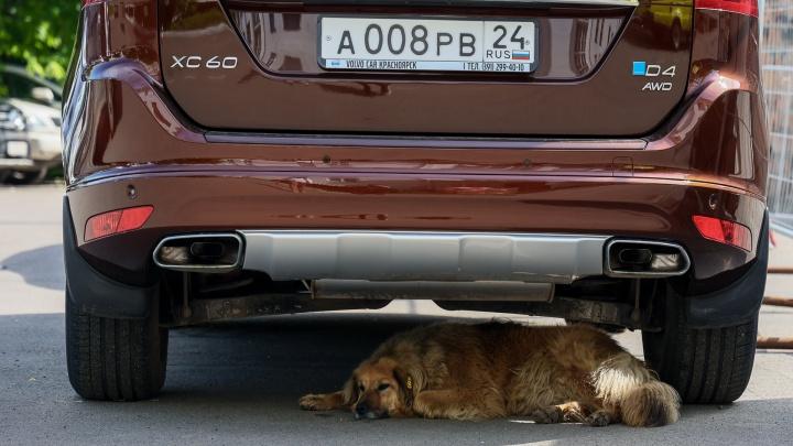 Стало известно о состоянии дедушки, на которого в Энергетиках напали собаки с бирками
