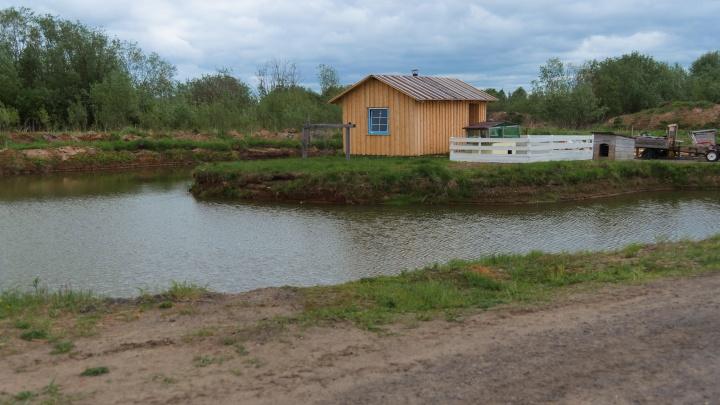 За сутки поступило более 300 заявок на получение арктического гектара в Архангельской области