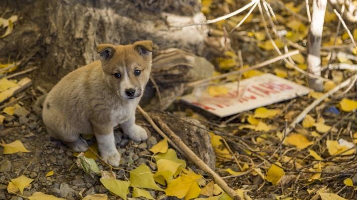 Под наблюдением вся семья: в Волгоградской области бешеная собака напала на человека