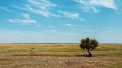 Нужны посадки: почему российский Юг накрывает пылью и по чьей вине плодородные земли пожирает пустыня