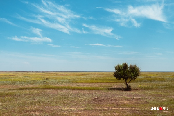 Редкие деревья — памятники десятилетиям борьбы с климатом