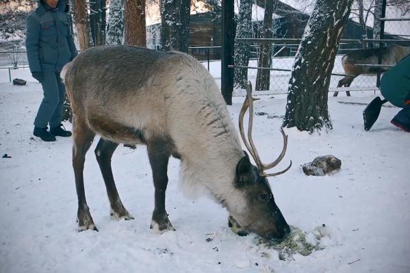 Освоение Арктики в СССР, говорится на сайте поселка, привело к исчезновению северных оленей