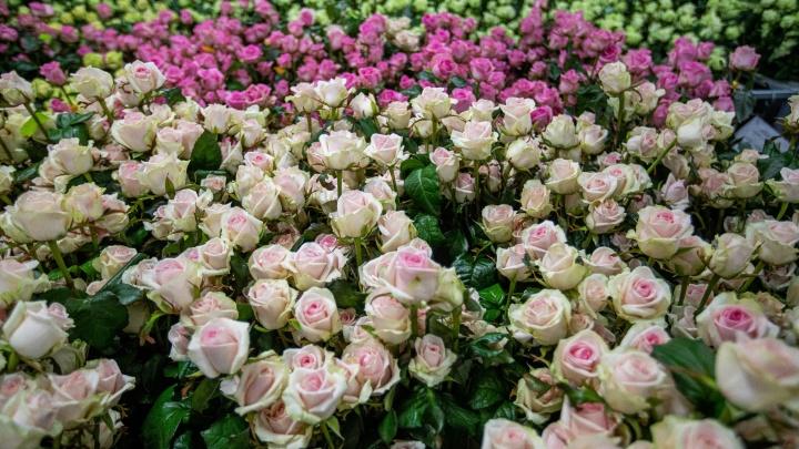 Где купить свежие цветы: открылся флористический центр с сибирскими розами вместо импортных