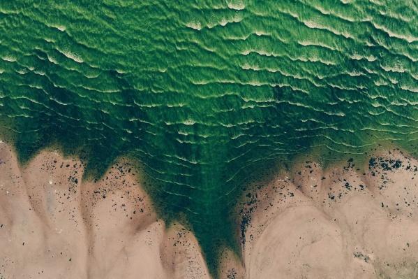 Волга в районе Тольятти уже зеленая