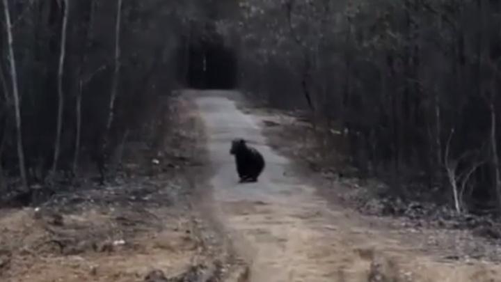 «Начал убегать, аж машину кинул». В поселке под Алапаевском мужчина обнаружил медведей