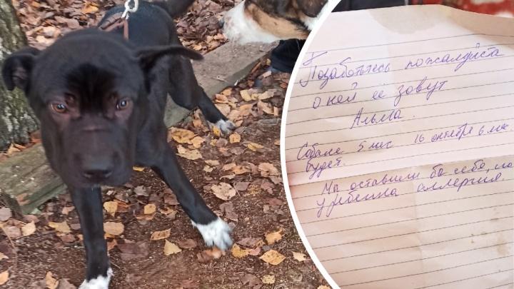 «У ребенка аллергия»: в Ярославле щенка привязали к дереву и бросили, оставив записку