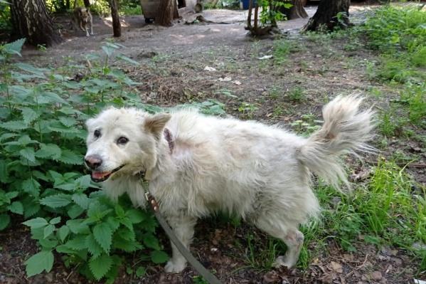 Несмотря на солидный возраст, у Беляша очень дружелюбный и веселый характер