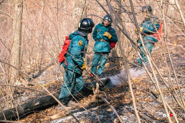 Из-за жаркой погоды в Самаре увеличилось число лесных и дачных пожаров