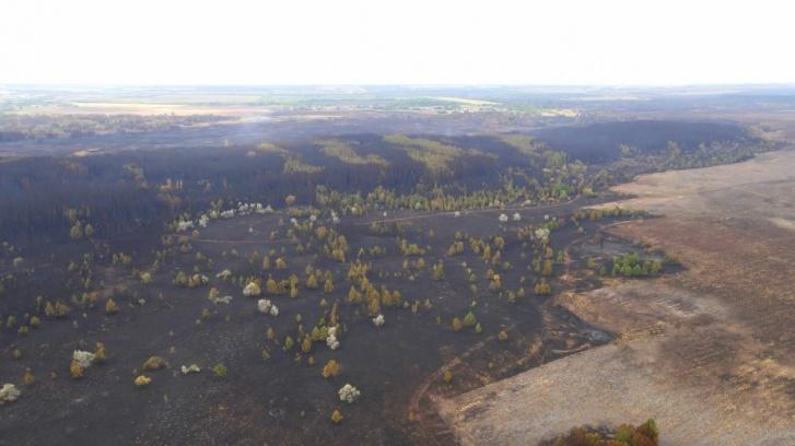 В лесах осталось немного не тронутых огнем деревьев