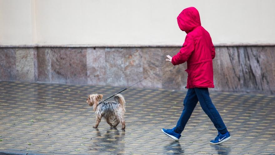 Маленькие, грязные, редкие. Хозяйка собаки — о площадках для питомцев в Ростове