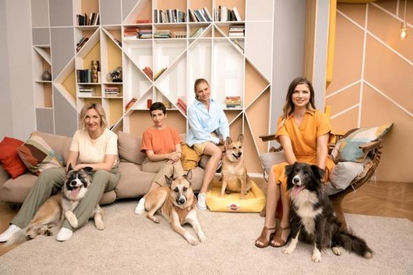 Лишь 11% опрошенных готовы взять собаку из приюта