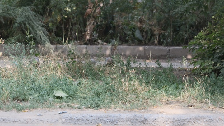 Стало известно, откуда в «Газели» на Конном проезде в Самаре взялись снаряды