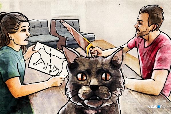 Можно ли развестись без суда и скандалов? Защитит ли брачный контракт от раздела имущества и кому достанется любимый кот? Разбираемся вместе с адвокатом