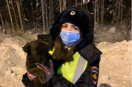 Щенка Счастливчика из ХМАО спасла полиция— услышали странные звуки из авто. Посмотрите на везунчика