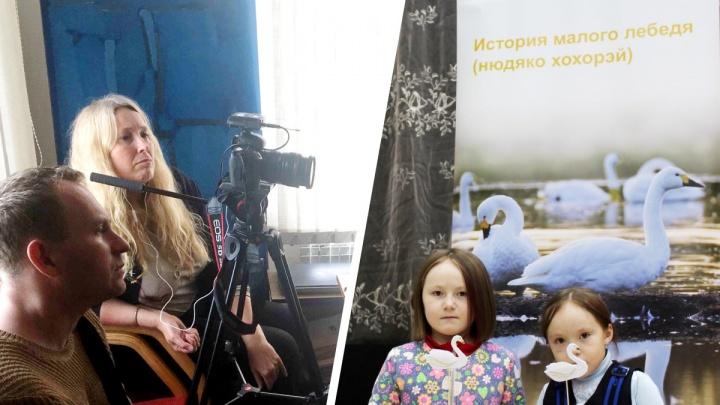 Британка делает кино про исчезающих лебедей, которых убивают. Она даже летала с ними из НАО в Европу