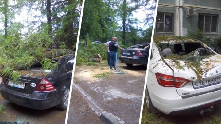 В Ростове дерево упало на припаркованные машины