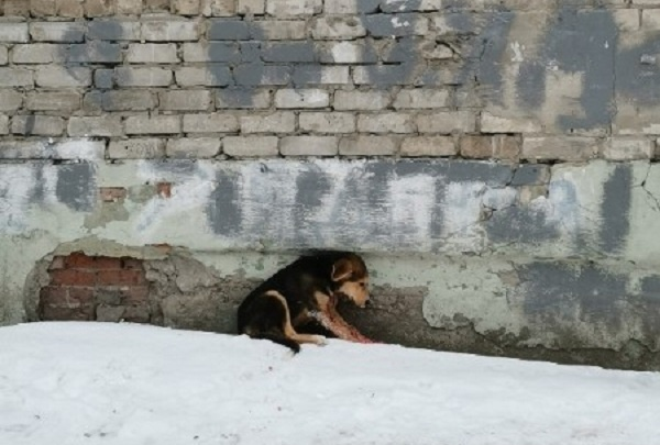 Тюменку, которая в порыве злости зарезала собаку, будут судить