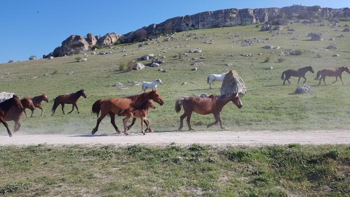 На Кубани приезжий украл с поля шесть лошадей, ему грозит до шести лет колонии