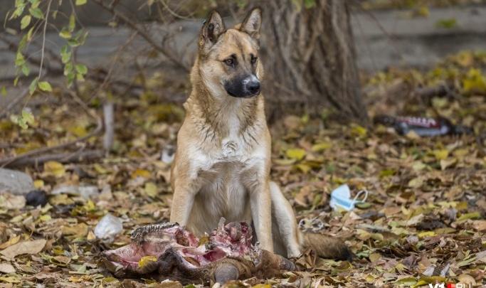 В Волгограде следователи ищут, кому принадлежали найденные на пустыре ноги и голова