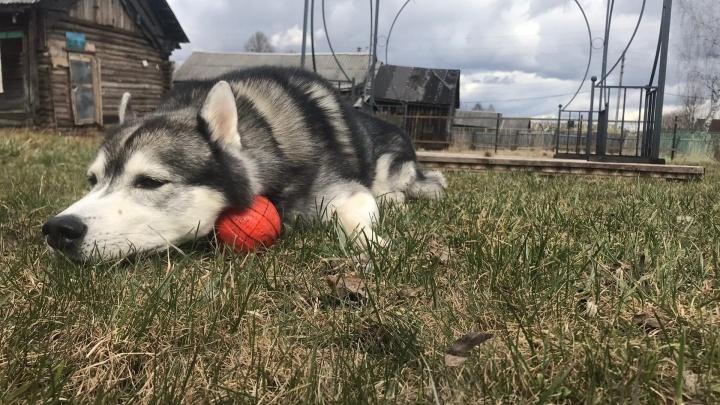 Собаки терроризировали весь поселок: в Ярославском районе построили незаконный питомник