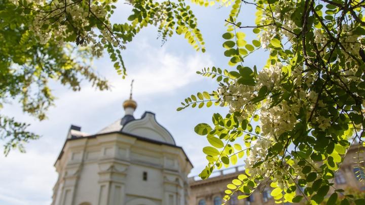 Не стоит доверять термометрам на остановках: климатолог — об установившейся в Волгограде майской жаре
