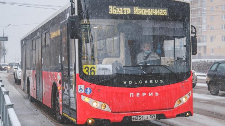 В Перми на время ремонта трамвайных путей на улице Уральской запустят укороченные автобусные рейсы